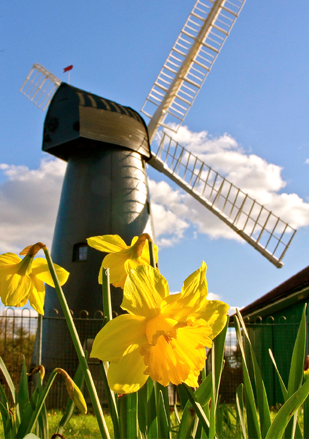 Brixton Windmill greeting card - spring