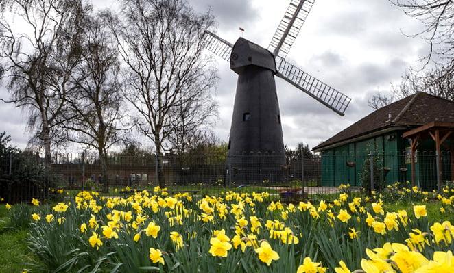 Brixton Windmill Gardens in Spring
